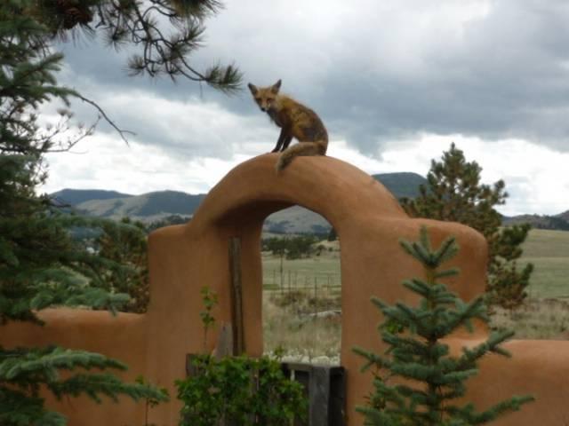 Guffey Colorado 80820 Listing 19129 Green Homes For Sale